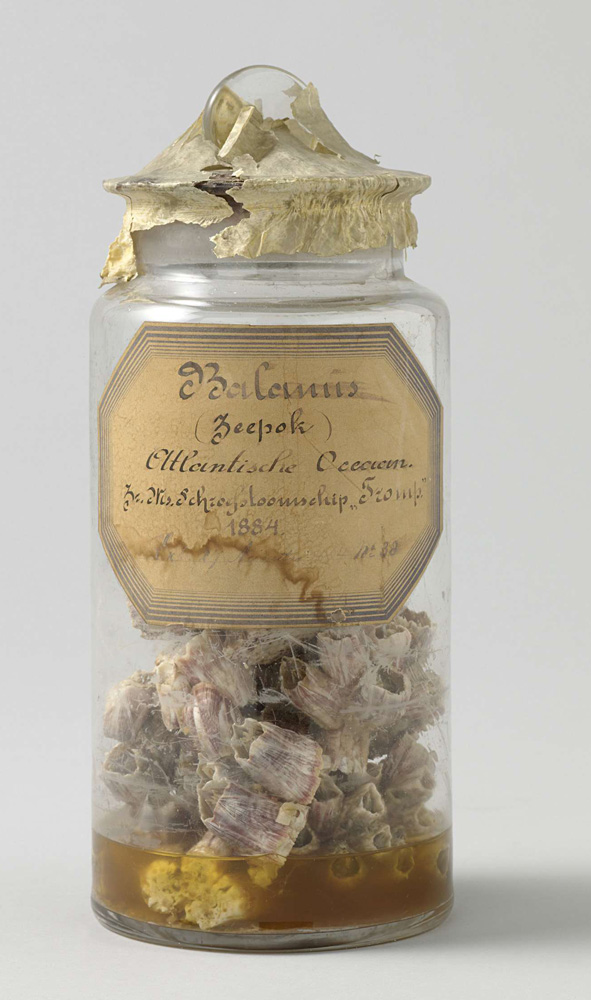 this is a jar with dead stuff from the ocean.