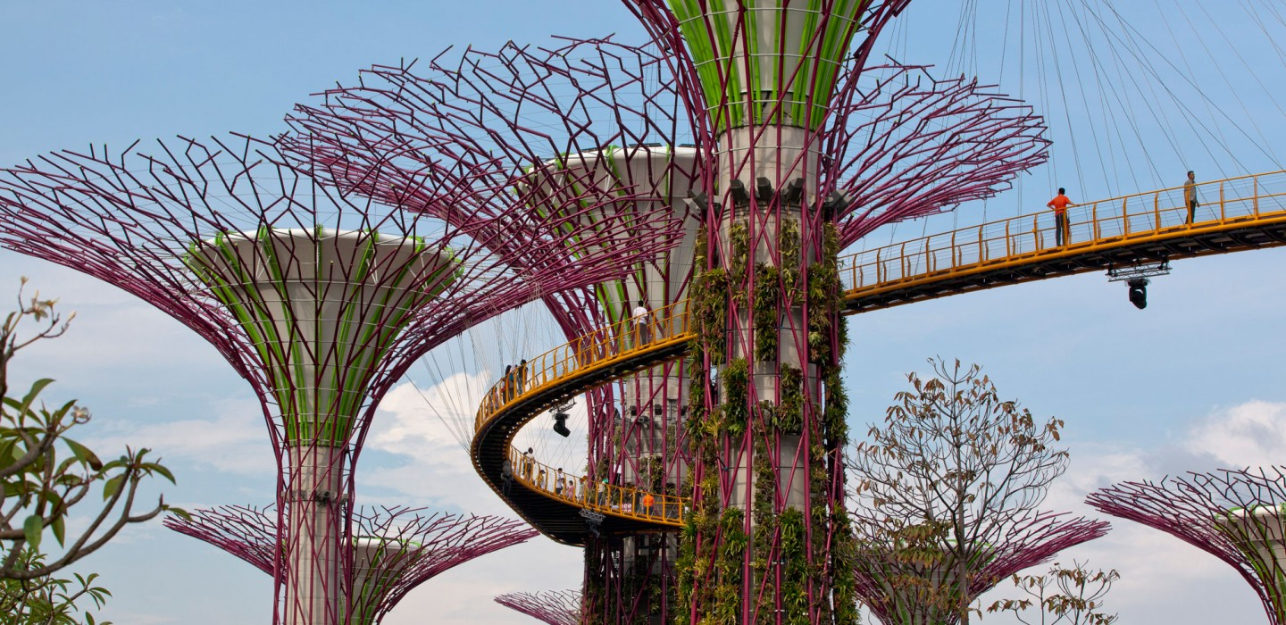 Supertrees of the Gardens By The Bay project