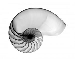 Nautilus-OS