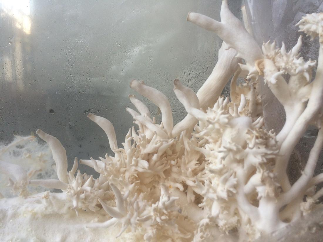 Mycelium_1100